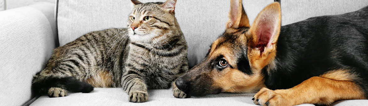 Cat and Dog lying on a sofa