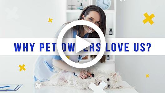 Why pets love us - Dr. Venkat Gutta