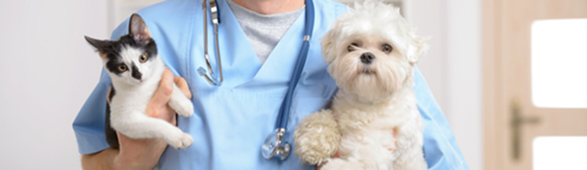 Doctor with dog and cat