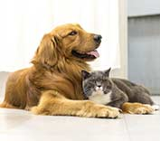 Jacksonville, FL area veterinarian explains what a wellness plan can do for your pet