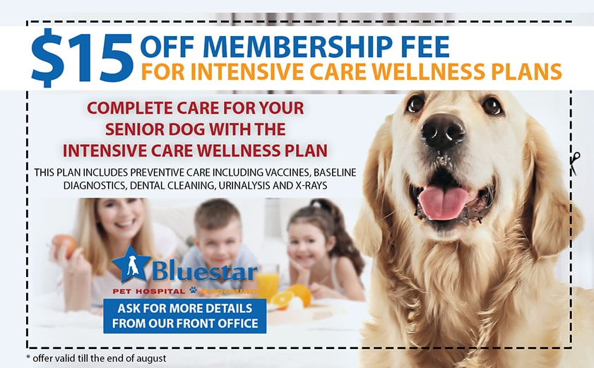 Discounts and Coupons from Bluestar Pet Hospital & Grooming