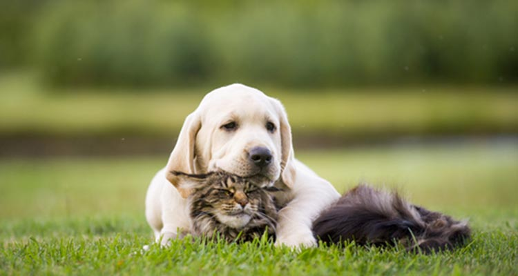 dog and cat friendship in St. Johns, FL area