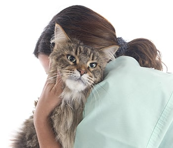 Pet euthanasia procedure at St. Johns & Jacksonville, FL