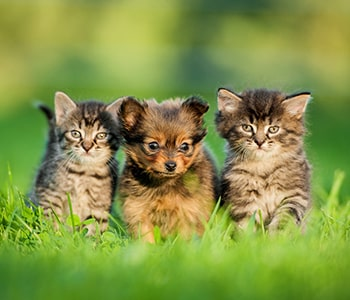 Helping Puppies and Kittens Stay Healthy From Day One in St Johns and Jacksonville, FL