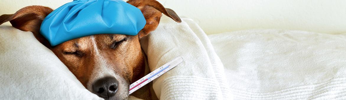 Emergency Pet Hospital Jacksonville, FL area