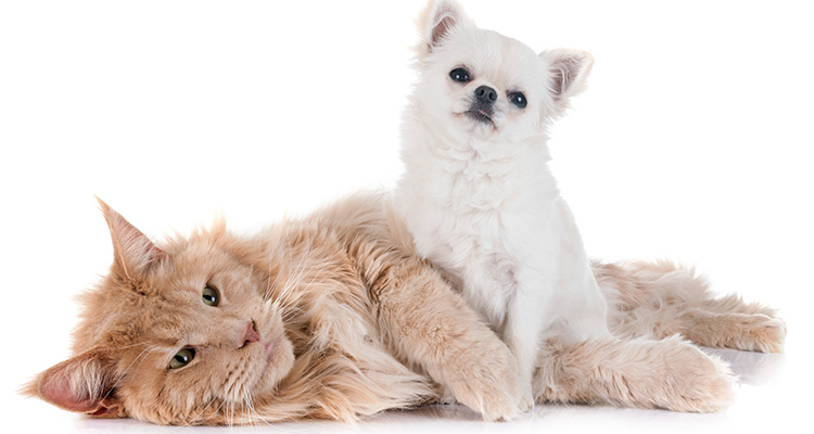 The team at Bluestar Pet Hospital and Grooming in Jacksonville FL area