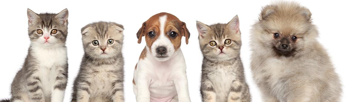 Urgent Vet Near Me for Puppy & Kitten at Bluestar Pet Hospital & Grooming in Jacksonville Area