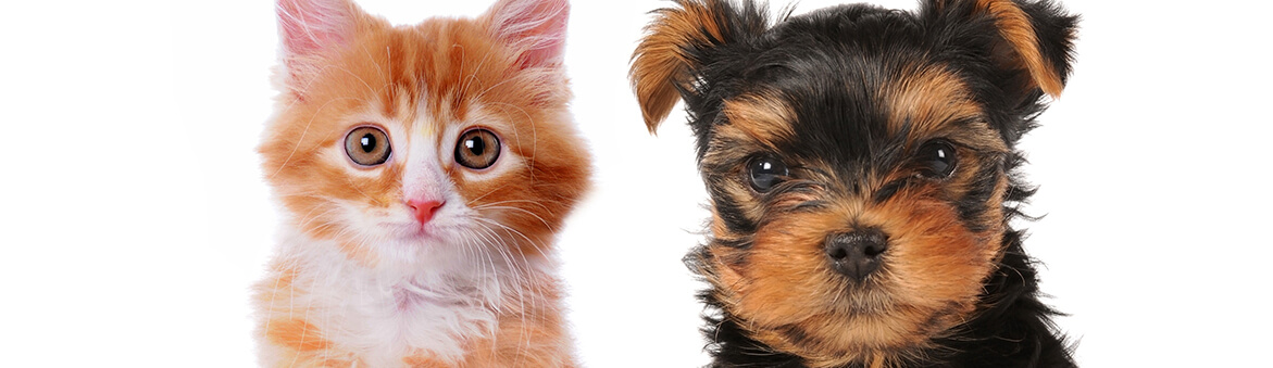 Pet Owners in Florida Tailor Pets' Healthcare Plan According to New AAHA and AAFP Feline Vaccination Guidelines