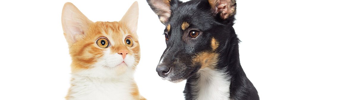 For the Good of Your Pet, Your Household, and Community: State-of-the-art Neutering Services in St. Johns, FL Area