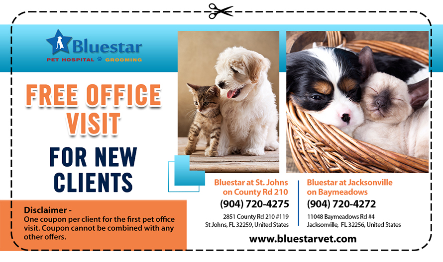 Free First Visit Offer, Animal Clinic in St Johns, FL